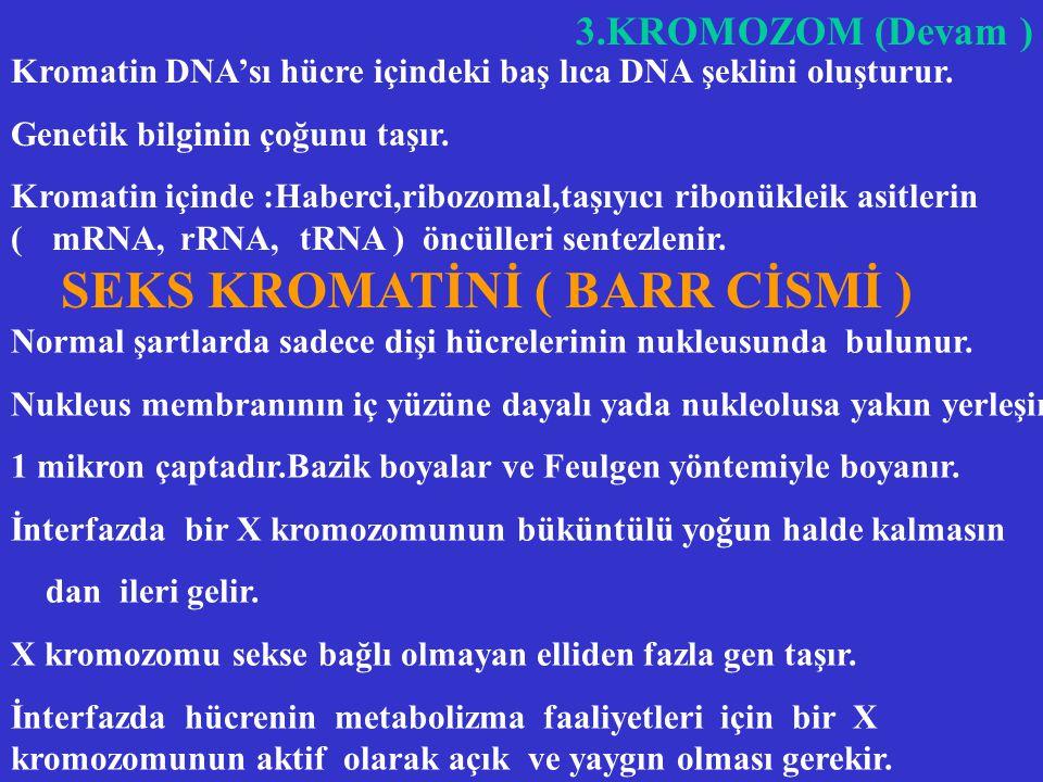 SEKS KROMATİNİ ( BARR CİSMİ )