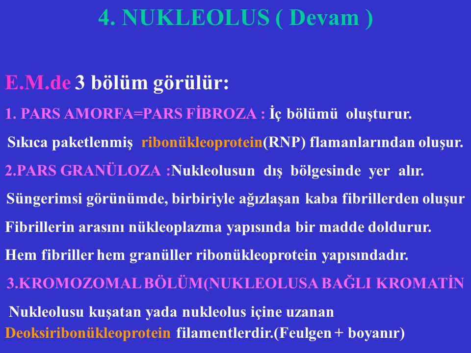 4. NUKLEOLUS ( Devam ) E.M.de 3 bölüm görülür: