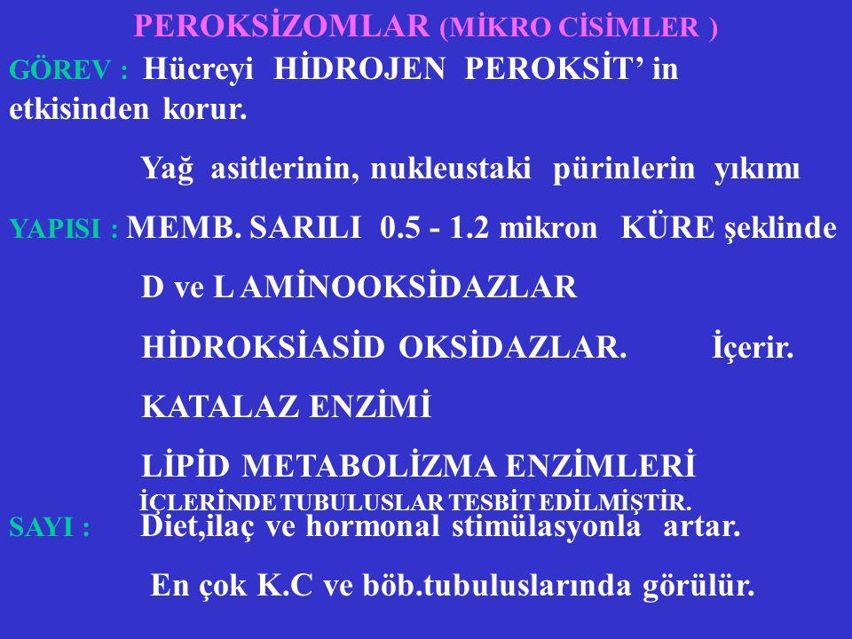 PEROKSİZOMLAR (MİKRO CİSİMLER )