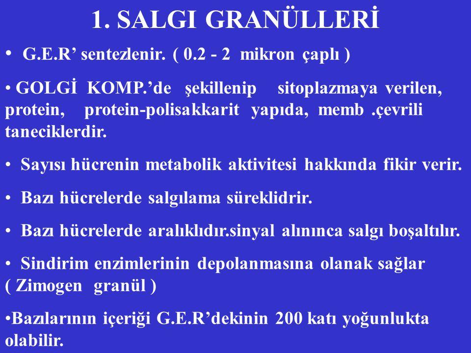 1. SALGI GRANÜLLERİ G.E.R' sentezlenir. ( 0.2 - 2 mikron çaplı )