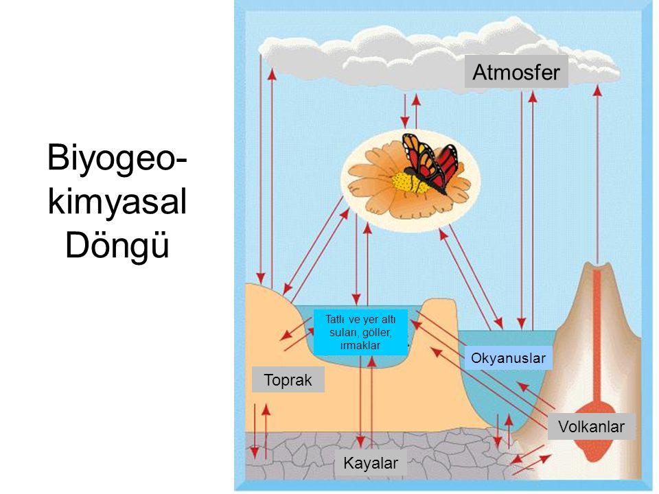 Biyogeo-kimyasal Döngü
