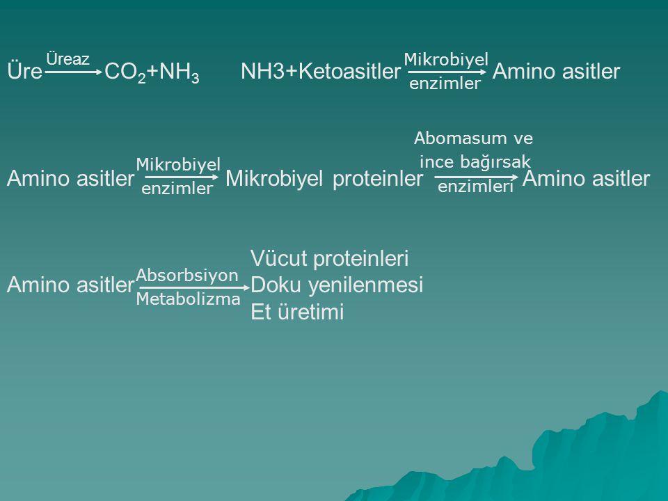 Üre CO2+NH3 NH3+Ketoasitler Amino asitler