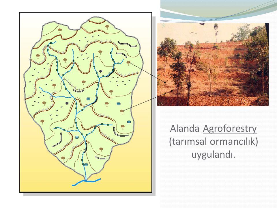Alanda Agroforestry (tarımsal ormancılık) uygulandı.