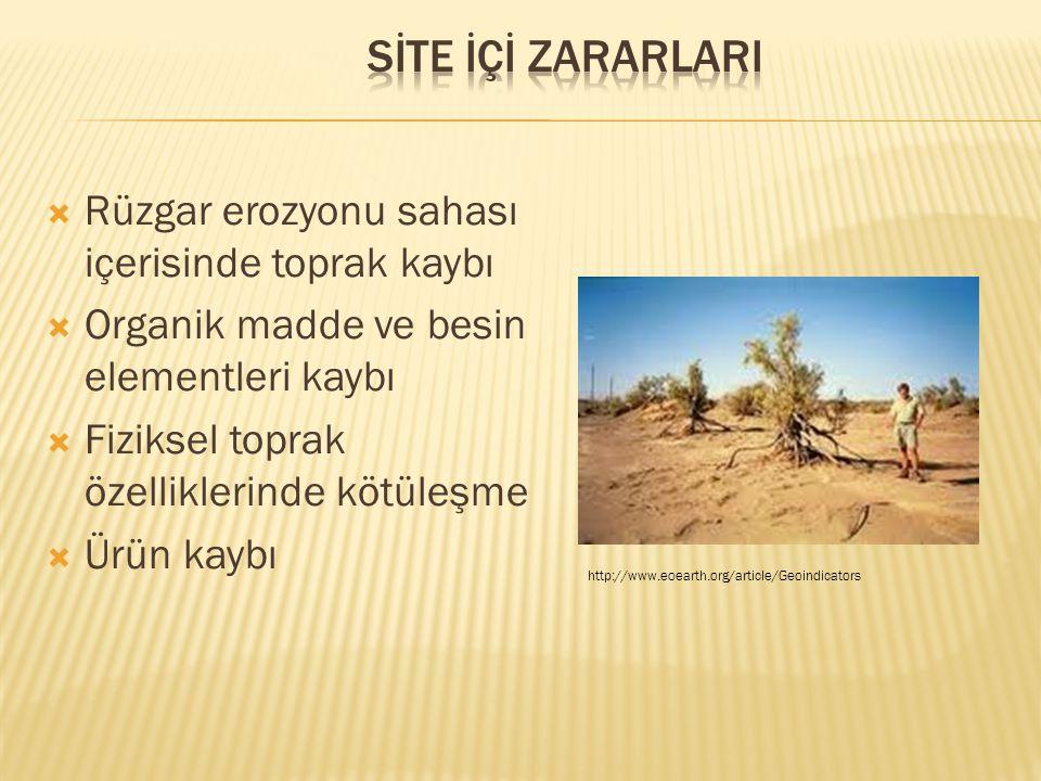 SİTE İÇİ ZARARLARI Rüzgar erozyonu sahası içerisinde toprak kaybı