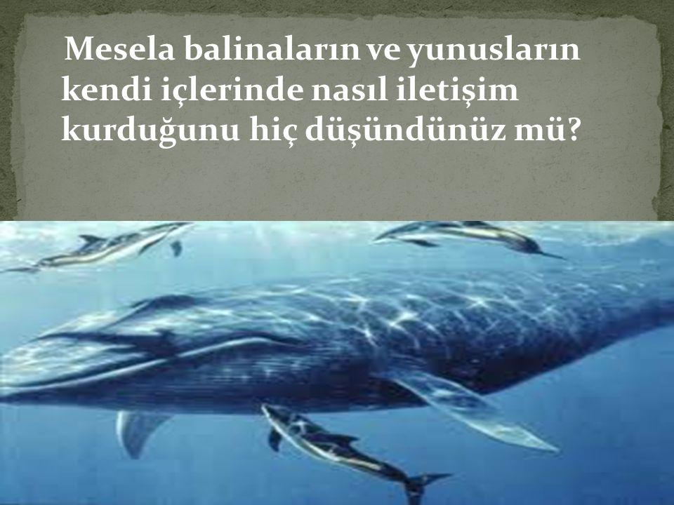 Mesela balinaların ve yunusların kendi içlerinde nasıl iletişim kurduğunu hiç düşündünüz mü