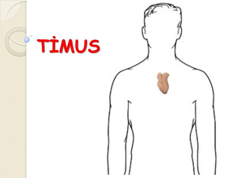 TİMUS