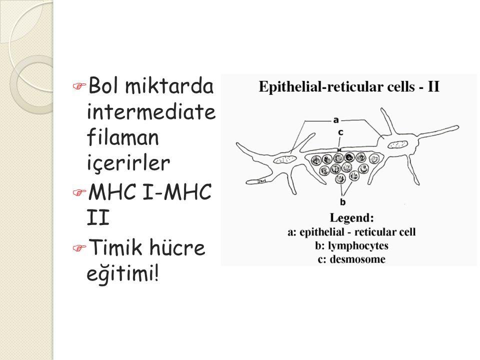 Bol miktarda intermediate filaman içerirler