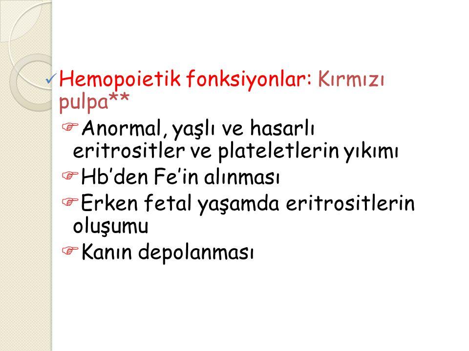 Hemopoietik fonksiyonlar: Kırmızı pulpa**