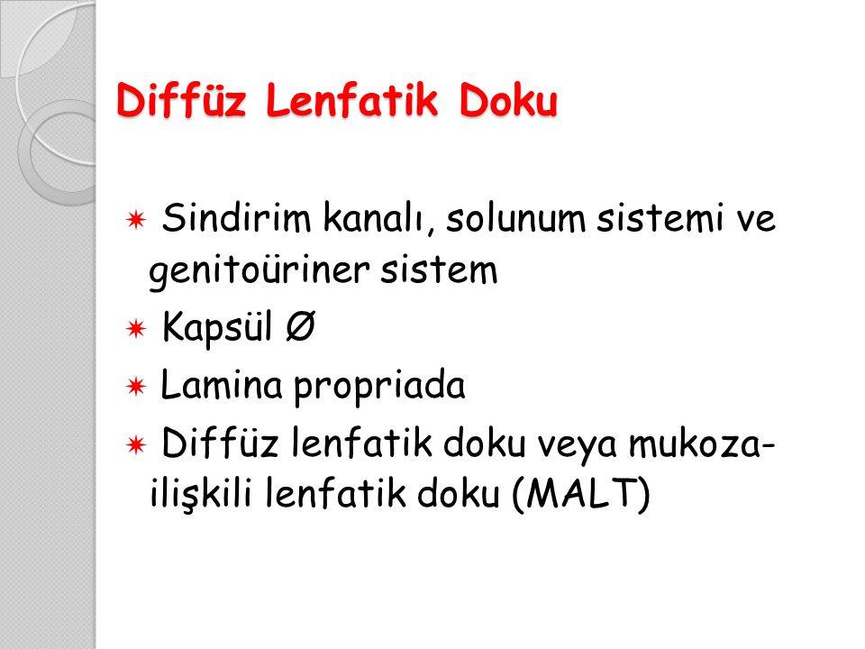 Diffüz Lenfatik Doku Sindirim kanalı, solunum sistemi ve genitoüriner sistem. Kapsül Ø. Lamina propriada.