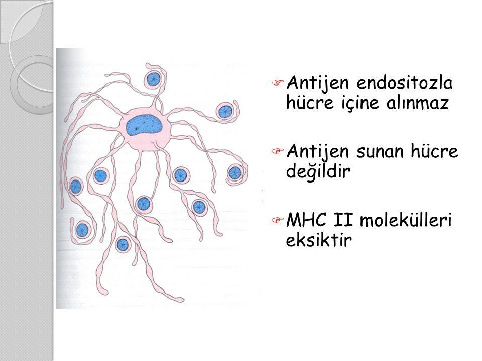 Antijen endositozla hücre içine alınmaz