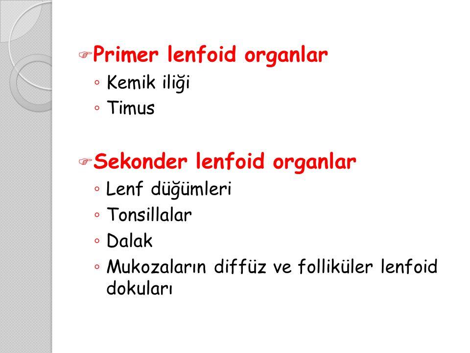 Primer lenfoid organlar