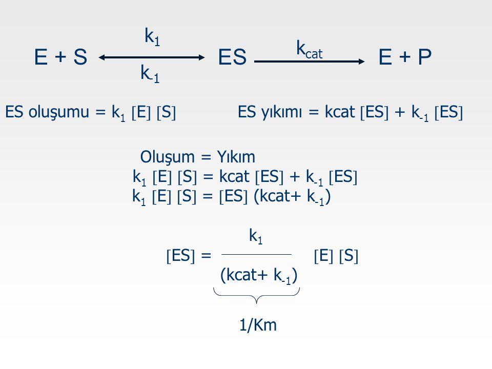 k1 kcat. E + S ES E + P. k-1. ES oluşumu = k1 E S ES yıkımı = kcat ES + k-1 ES