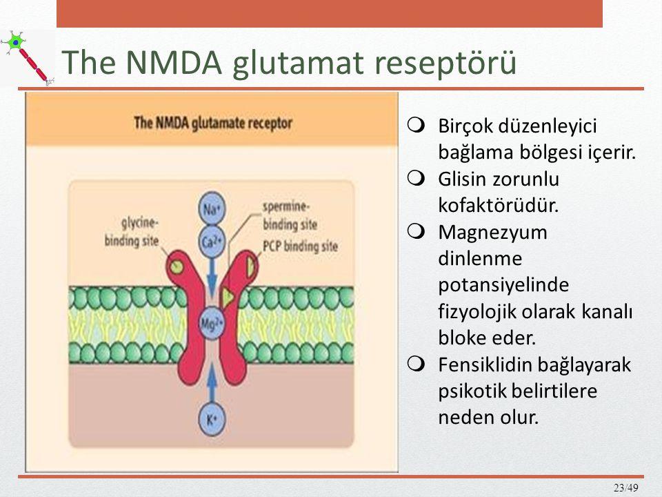 The NMDA glutamat reseptörü