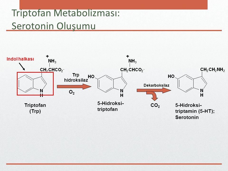 Triptofan Metabolizması: Serotonin Oluşumu