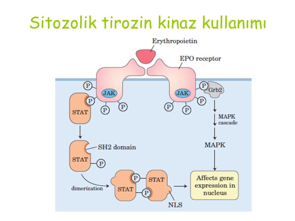 Sitozolik tirozin kinaz kullanımı