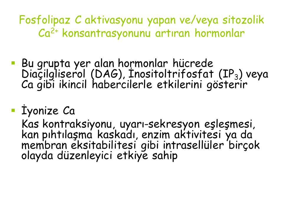 Fosfolipaz C aktivasyonu yapan ve/veya sitozolik Ca2+ konsantrasyonunu artıran hormonlar