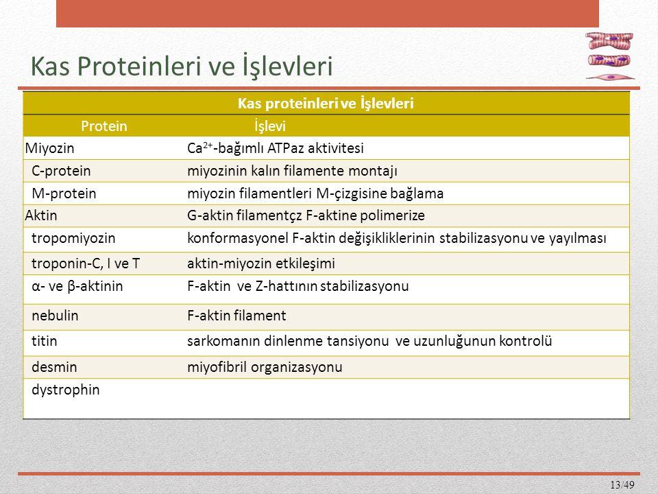 Kas Proteinleri ve İşlevleri