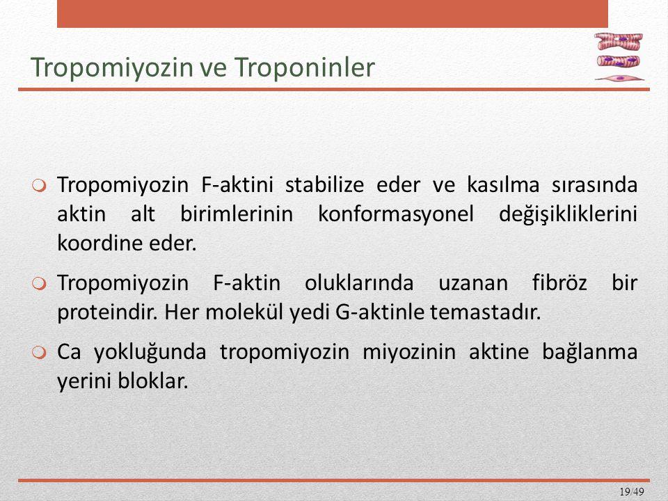 Tropomiyozin ve Troponinler