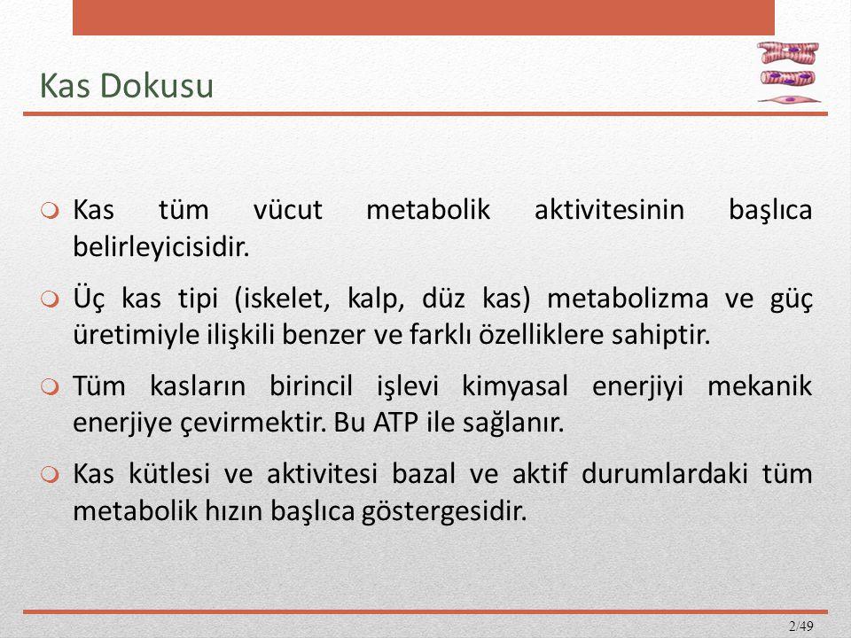 Kas Dokusu Kas tüm vücut metabolik aktivitesinin başlıca belirleyicisidir.