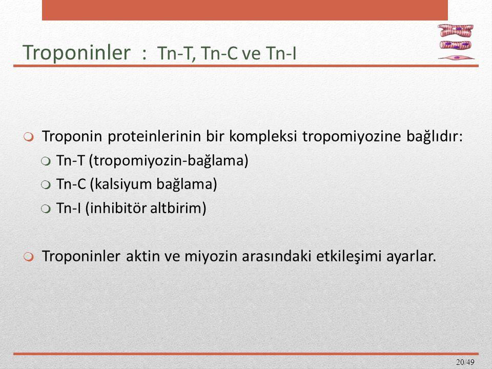 Troponinler : Tn-T, Tn-C ve Tn-I