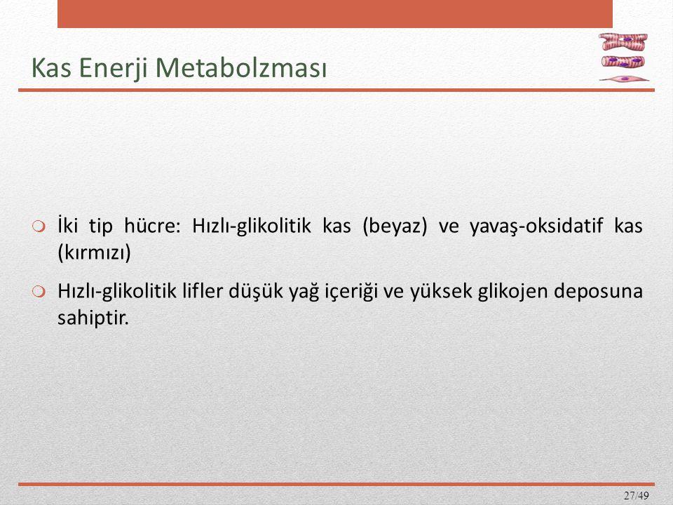 Kas Enerji Metabolzması