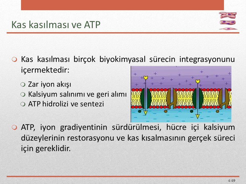 Kas kasılması ve ATP Kas kasılması birçok biyokimyasal sürecin integrasyonunu içermektedir: Zar iyon akışı.