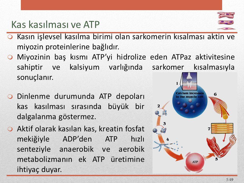 Kas kasılması ve ATP Kasın işlevsel kasılma birimi olan sarkomerin kısalması aktin ve miyozin proteinlerine bağlıdır.