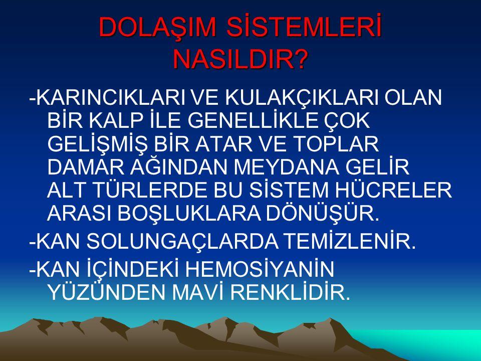 DOLAŞIM SİSTEMLERİ NASILDIR