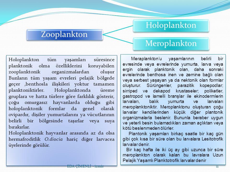 Zooplankton Holoplankton. Meroplankton.