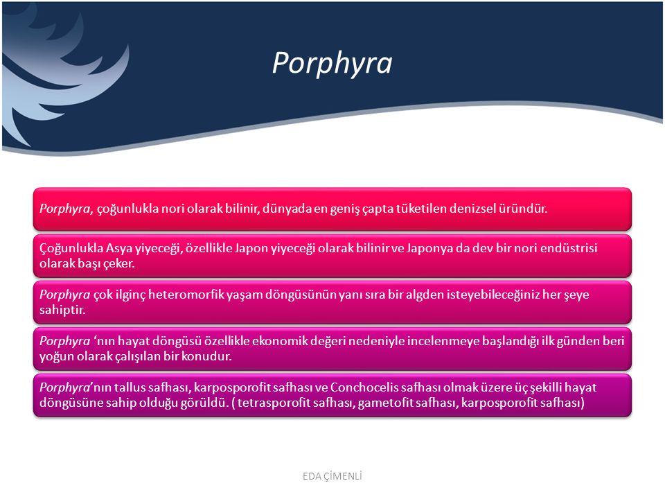 Porphyra Porphyra, çoğunlukla nori olarak bilinir, dünyada en geniş çapta tüketilen denizsel üründür.