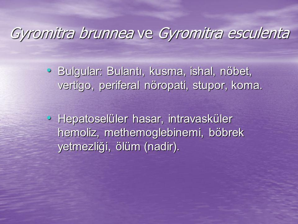 Gyromitra brunnea ve Gyromitra esculenta
