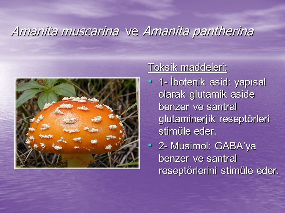 Amanita muscarina ve Amanita pantherina