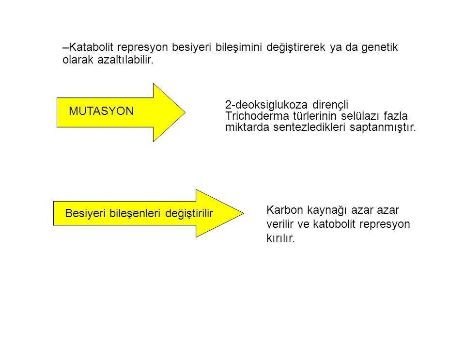 Katabolit represyon besiyeri bileşimini değiştirerek ya da genetik olarak azaltılabilir.