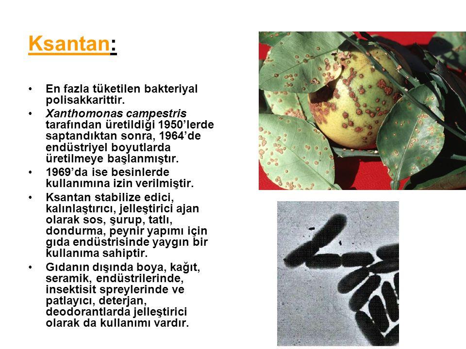 Ksantan: En fazla tüketilen bakteriyal polisakkarittir.