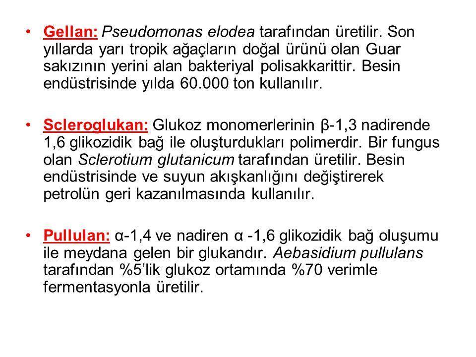 Gellan: Pseudomonas elodea tarafından üretilir