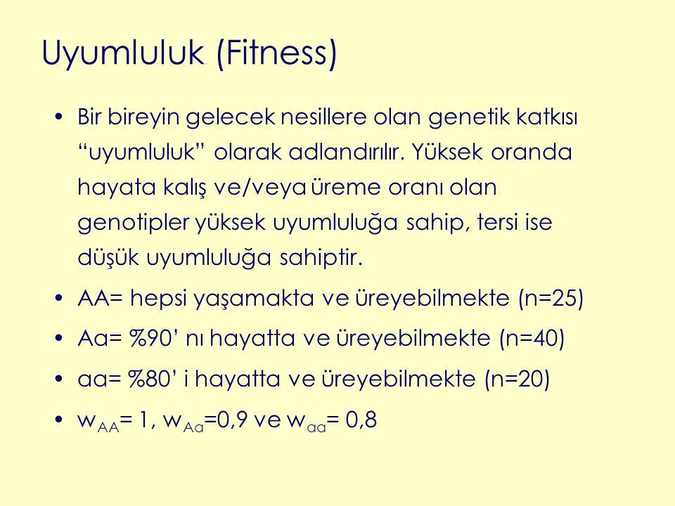 Uyumluluk (Fitness)