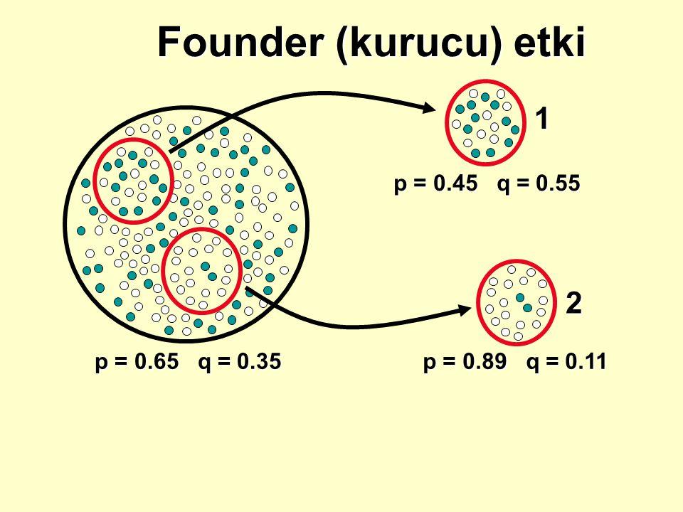 Founder (kurucu) etki 1 2 p = 0.45 q = 0.55 p = 0.65 q = 0.35