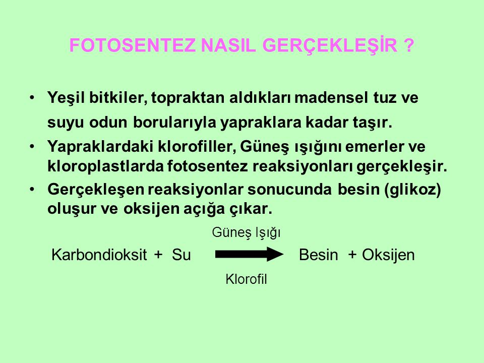 FOTOSENTEZ NASIL GERÇEKLEŞİR