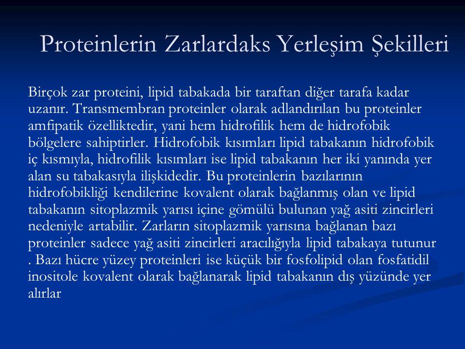 Proteinlerin Zarlardaks Yerleşim Şekilleri