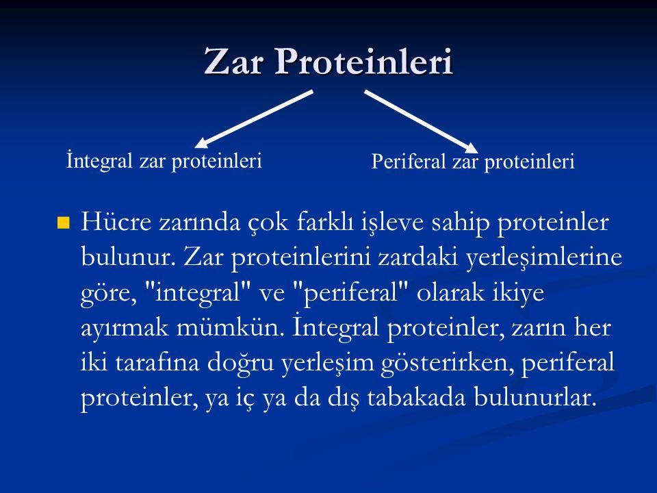 Zar Proteinleri İntegral zar proteinleri. Periferal zar proteinleri.