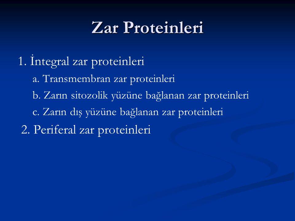 Zar Proteinleri 1. İntegral zar proteinleri