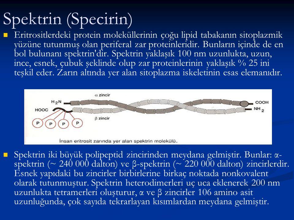 Spektrin (Specirin)