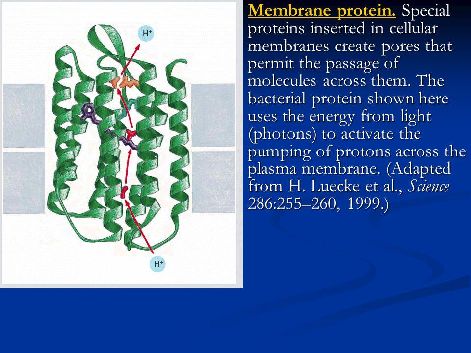 Membrane protein.