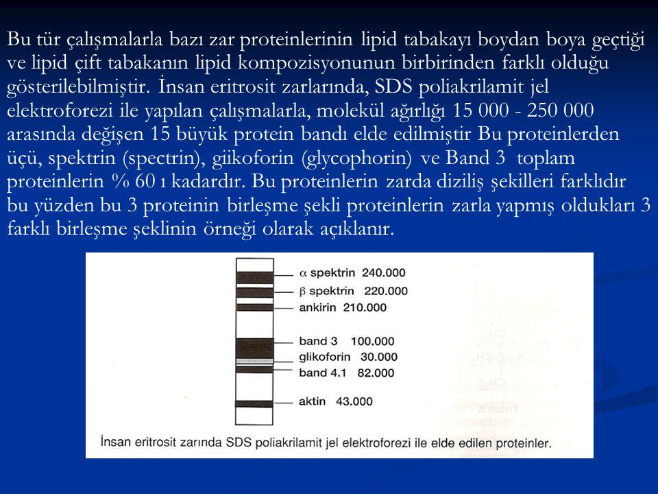 Bu tür çalışmalarla bazı zar proteinlerinin lipid tabakayı boydan boya geçtiği ve lipid çift tabakanın lipid kompozisyonunun birbirinden farklı olduğu gösterilebilmiştir.