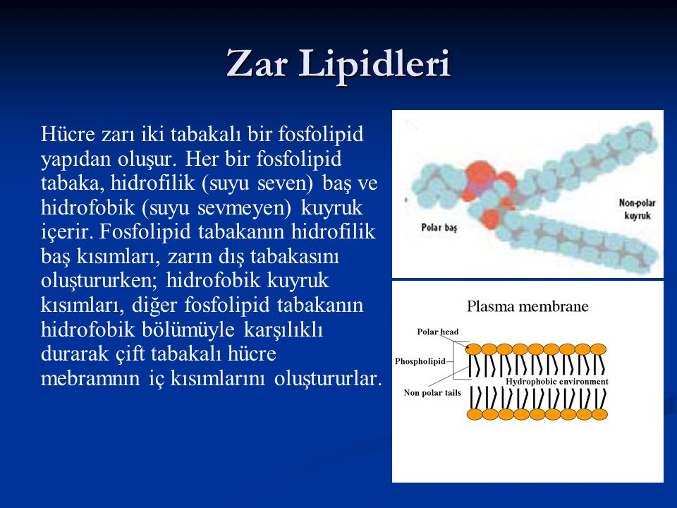 Zar Lipidleri