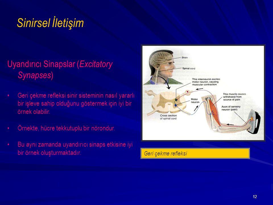 Sinirsel İletişim Uyandırıcı Sinapslar (Excitatory Synapses)