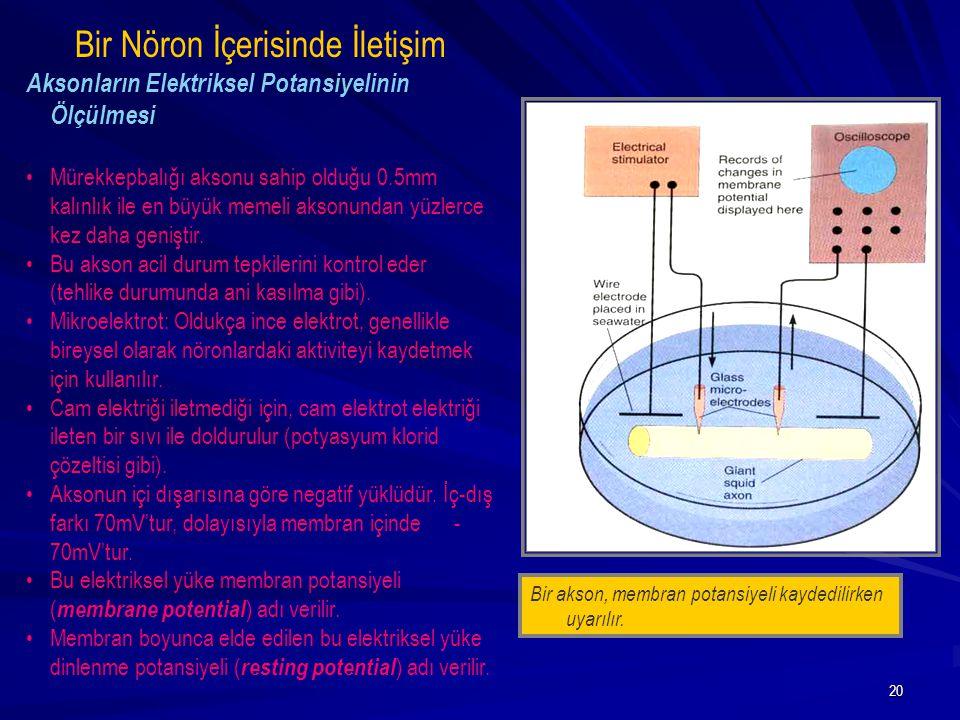 Bir Nöron İçerisinde İletişim