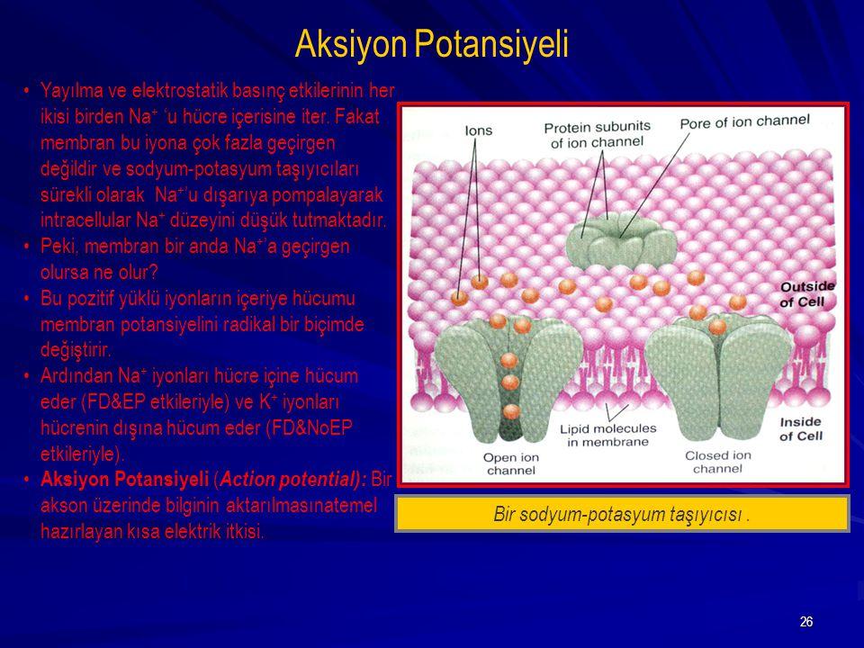 Bir sodyum-potasyum taşıyıcısı .