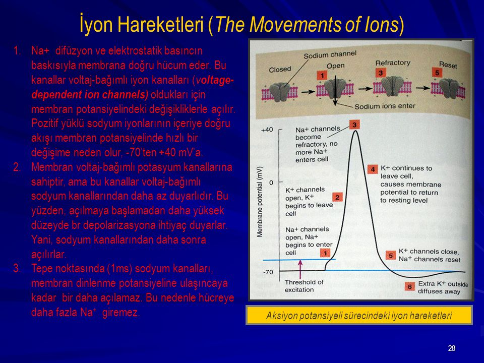 İyon Hareketleri (The Movements of Ions)