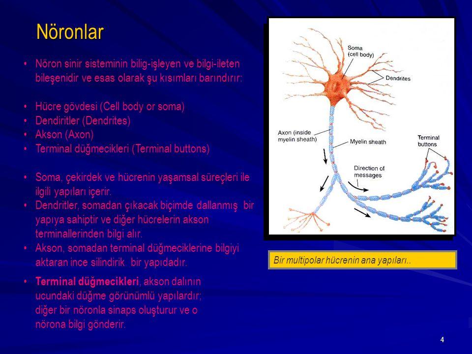 Nöronlar Nöron sinir sisteminin bilig-işleyen ve bilgi-ileten bileşenidir ve esas olarak şu kısımları barındırır: